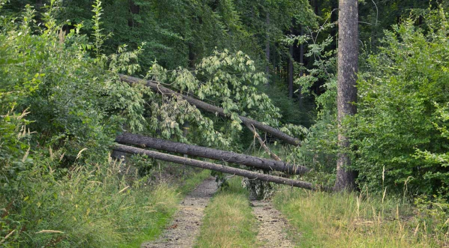 Tips for Dealing with Tropical Storms and Clean Up