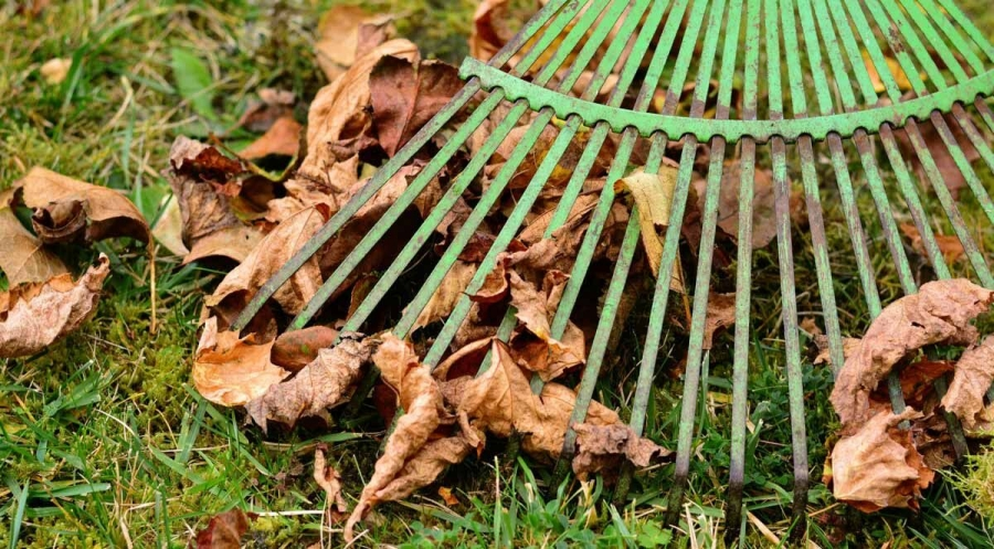 Should You Rake Leaves or Leave Them?