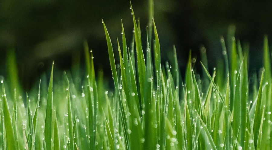 How to Keep Your Lawn Green During Summer